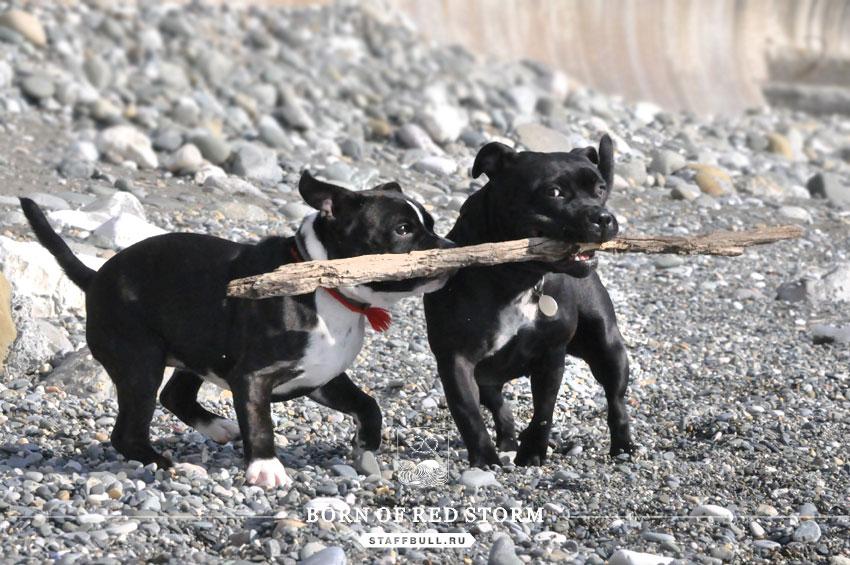 2016-02-23-staffbulls-ru-7