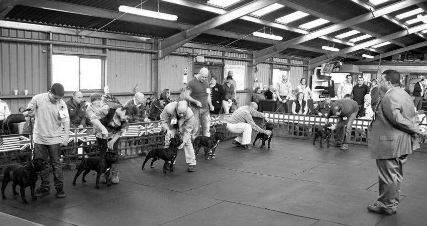 группы пород и классы на выставках собак