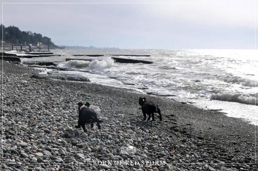 2016-01-25-staffbulls-ru-3