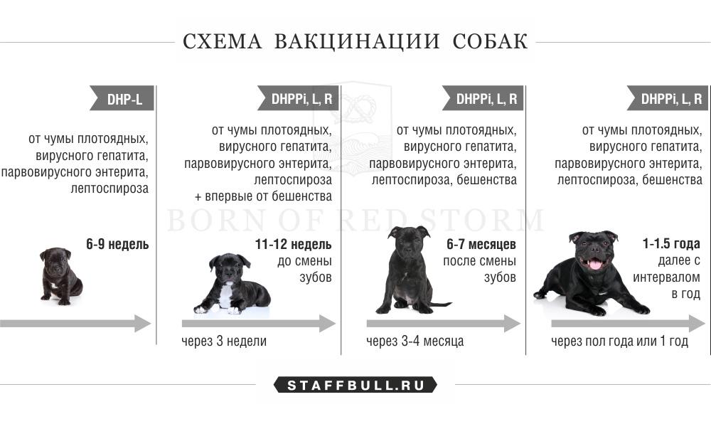 таблица прививок щенкам